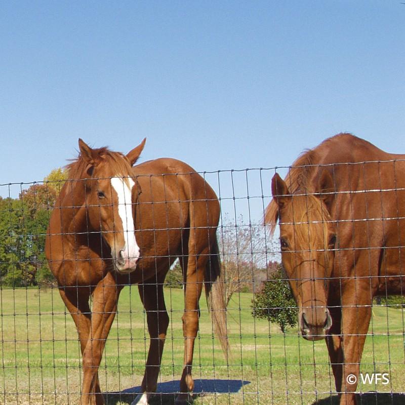Bekaert 2x4 Horseman® 12½-14 Gauge ZA C20, 19-72-2, 100'