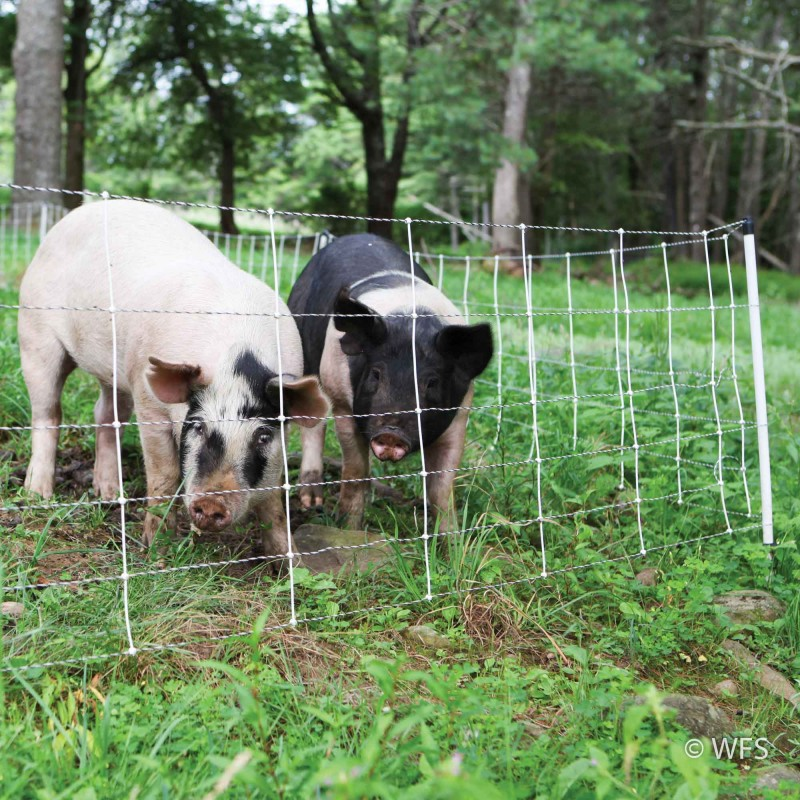 Pig QuikFence™ 6/30/12 x 100'
