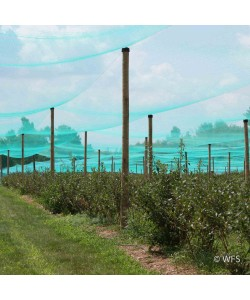 Smart Net Bird Netting, 50' x 531'