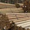 "Premium Lodge Pole Pine, PT 5-6"" x 14'"