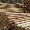 "Premium Lodge Pole Pine, PT 5-6"" x 8'"
