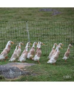 PoultryNet™ 12/42/3 x 164'