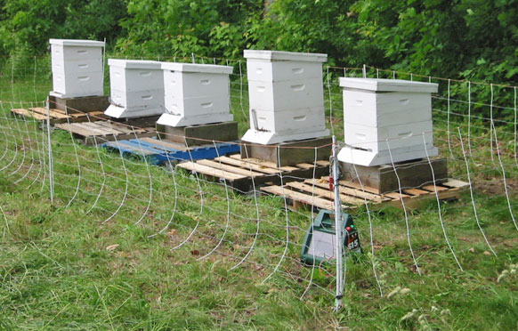 Beehive Protection from Wellscroft