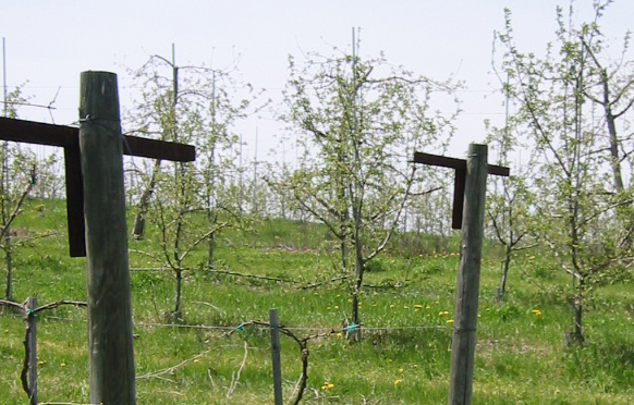 Fruit Tree Solutions from Wellscroft