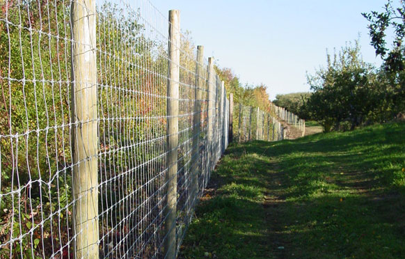 Orchard Fencing