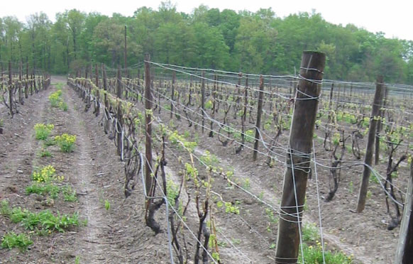 Trellising Solutions from Wellscroft