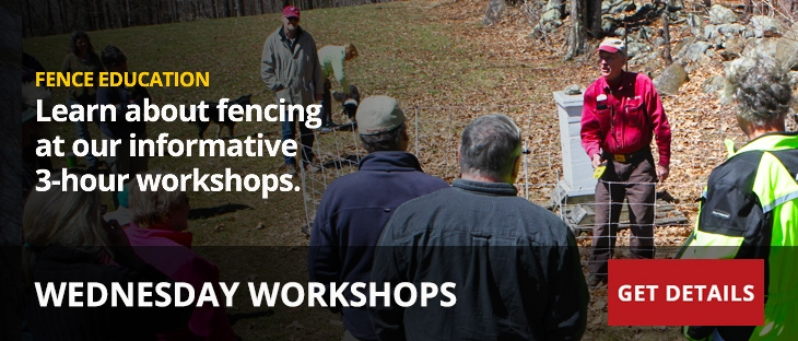 Wednesday Workshop