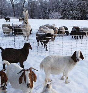Winterizing Your Fence & Energizer